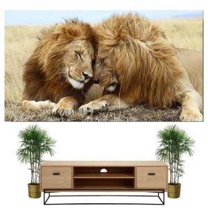 Lion Twins Paint Colors