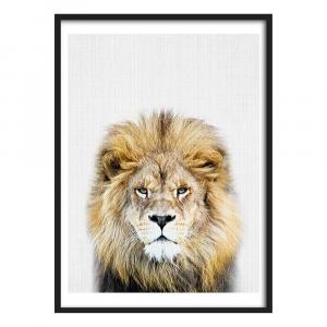 Beautiful Mane Lion Wall Art