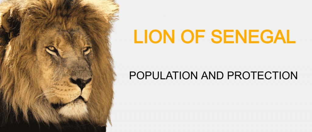 lion senegal