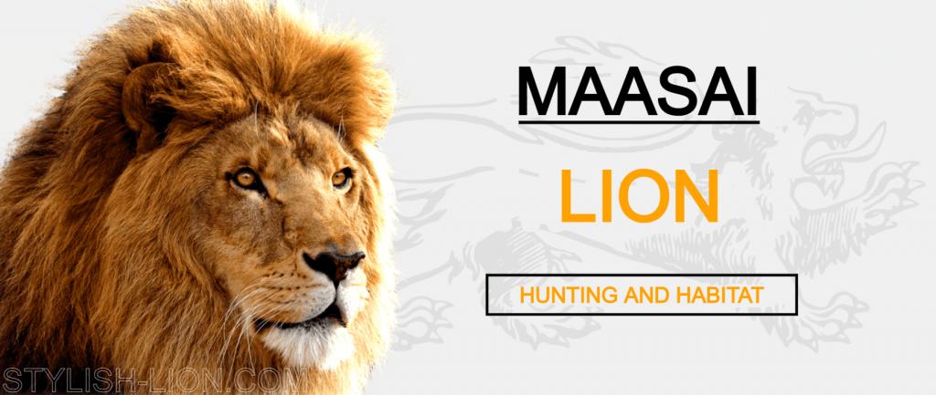 maasai lion